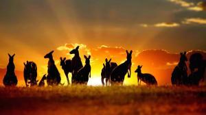 Kinh Nghiệm Du Lịch Úc Mùa Hè Mà Quý Khách Nên Biết