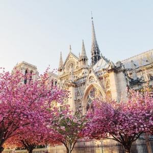 5 Địa Điểm Ngắm Hoa Anh Đào Tại Pháp Làm Nao Nức Lòng Du Khách