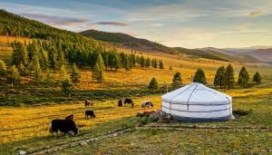 Du Lịch Mông Cổ Mùa Nào Đẹp Nhất? - Cẩm Nang Du Lịch Mông Cổ