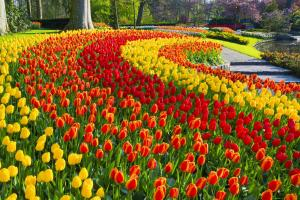 Lễ Hội Hoa Tulip Ở Hà Lan Có Gì Đặc Sắc ?