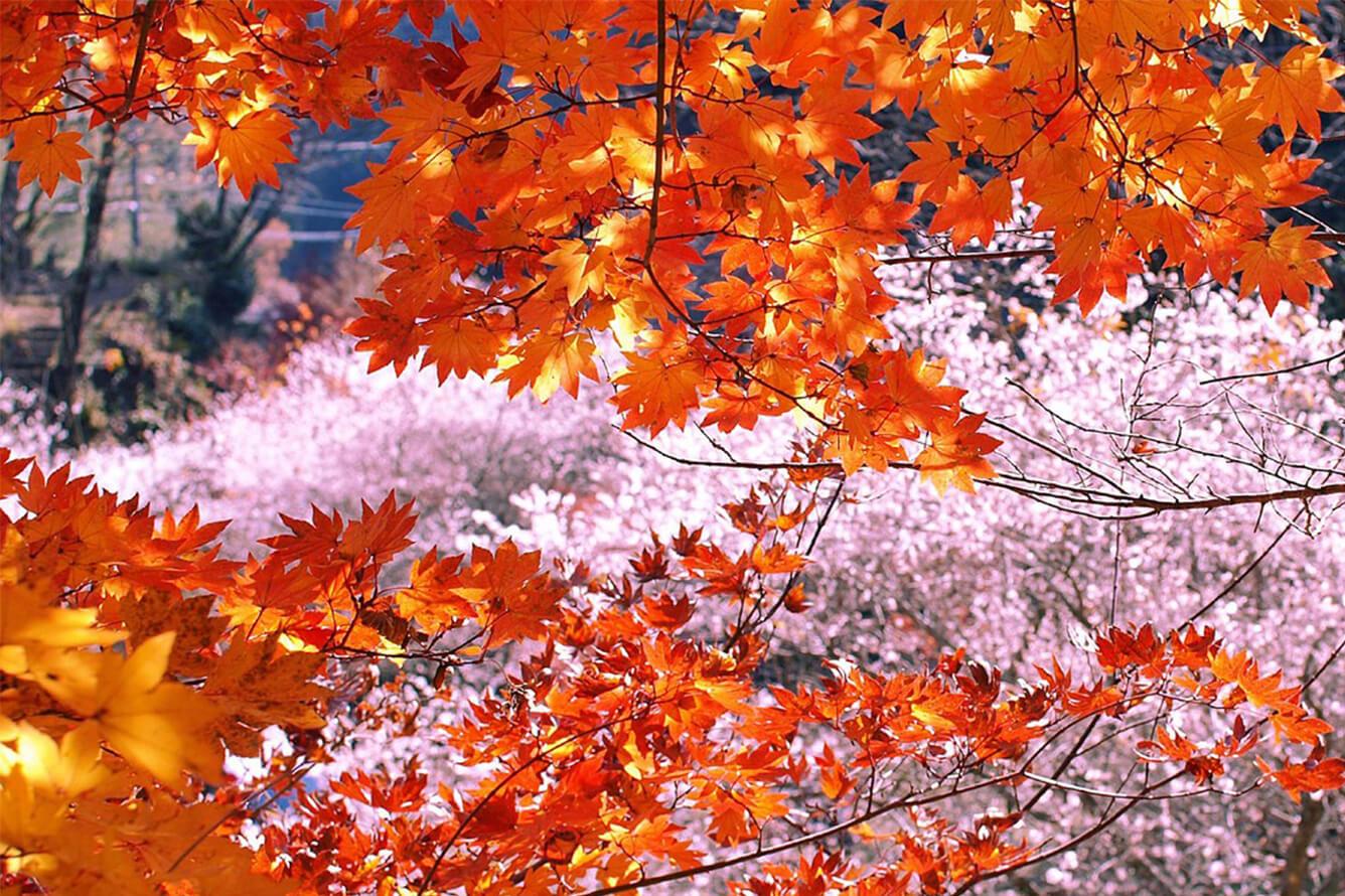 Tour Du Lịch Nhật Bản 5 Ngày 4 Đêm: Gifu - Aichi - Hamamatsu