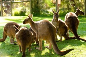 Tour du lịch Australia bay Vietnam Airline