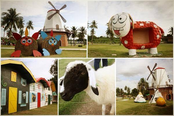 Nông trại cừu Thái Lan
