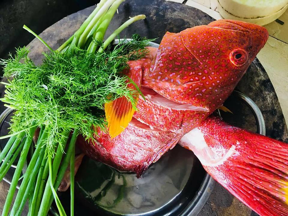 Cá mú đỏ côn đảo