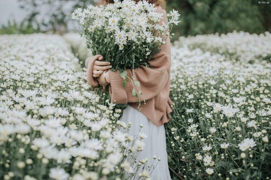 Ghé thăm vườn cúc họa mi