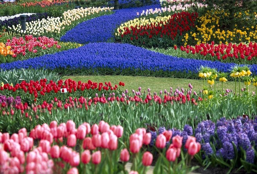 Mùa hoa Tulip