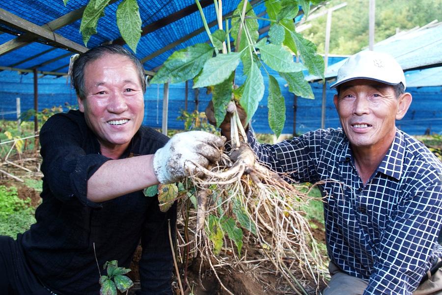 Nông trại nhân sân - Vietourist chuyên tour Hàn Quốc