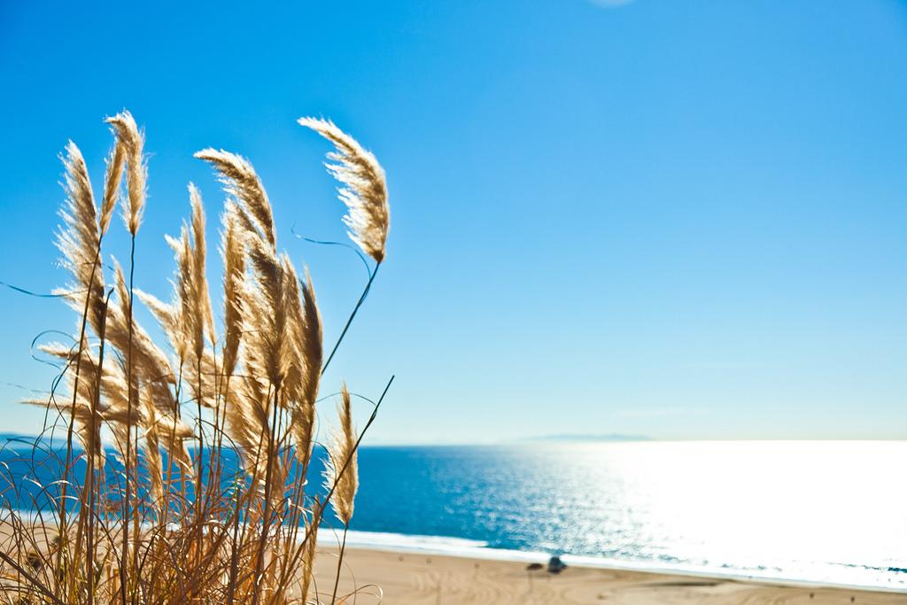 Thành phố Los angeles các địa điểm yêu thích - Bãi biển Santa Monica