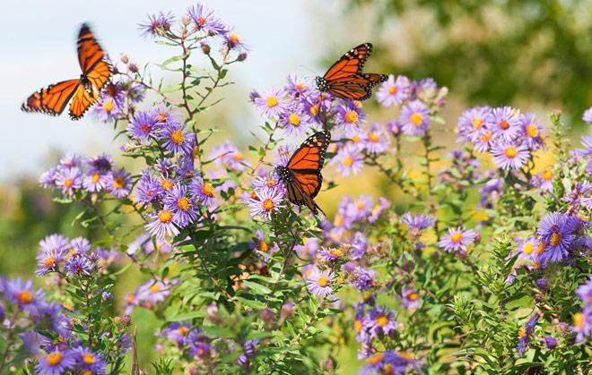 Trại bướm Thái Lan